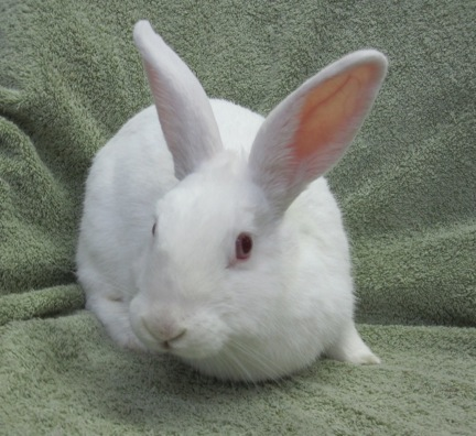 Cats Amp Rabbits Amp More Adoptions Education Pet