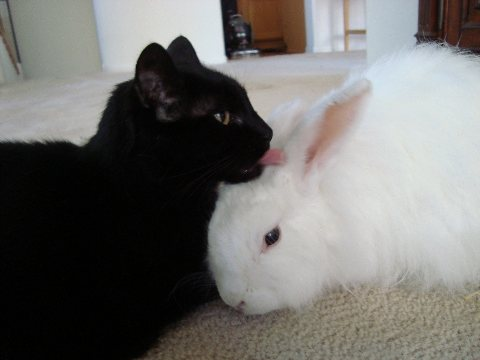 Cats Amp Rabbits Amp More Adoptions Education Pet